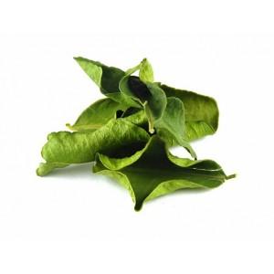 Листья кафрского лайма сушеные THAI MASTERS, 20 грамм